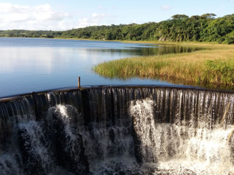 A Marituba do Peixe é o Pantanal Alagoano