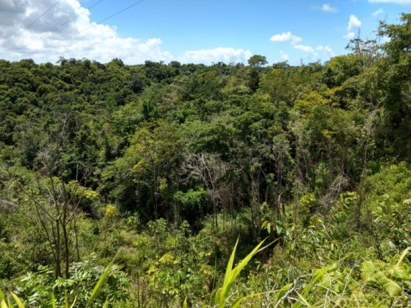 Alagoas zera o desmatamento da Mata Atlântica