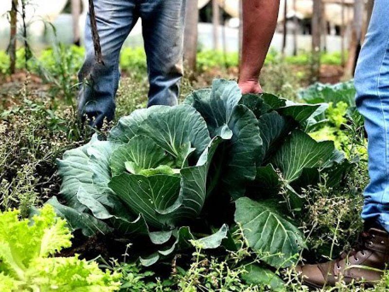 Programa Nacional de Bioinsumos incentiva desenvolvimento sustentável na agropecuária