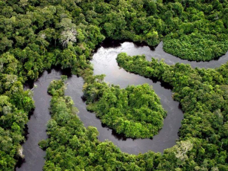 Preservação: Ministério do Meio Ambiente instituiu o Programa Floresta+