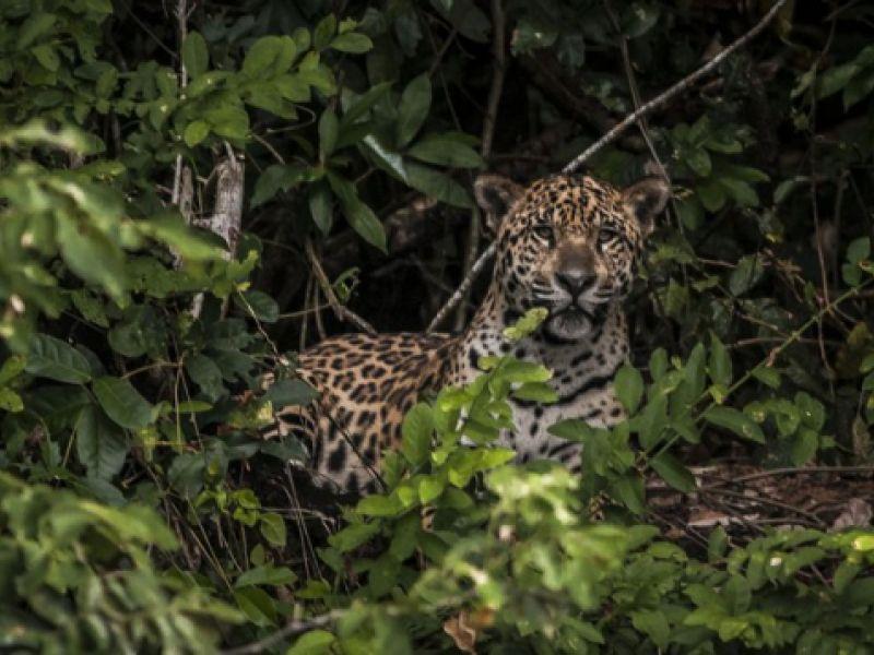 Petrobras faz doação para ajudar no resgate de animais no Pantanal