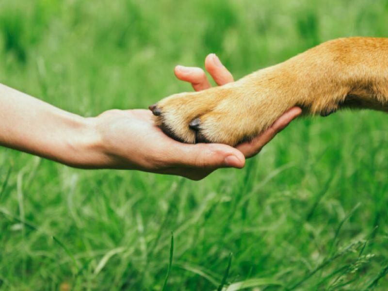Projeto de lei inclui direitos dos animais no currículo do ensino fundamental