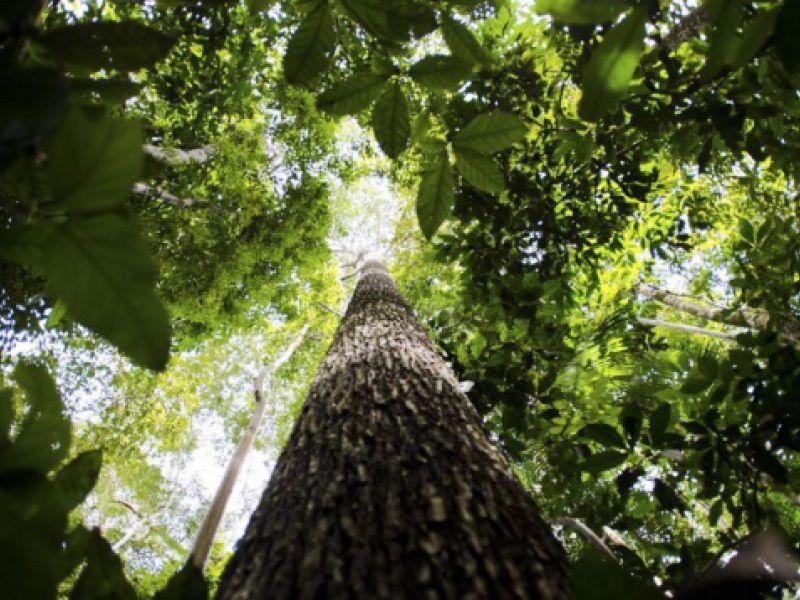 Meio Ambiente: Floresta + Carbono incentiva conservação de vegetação nativa