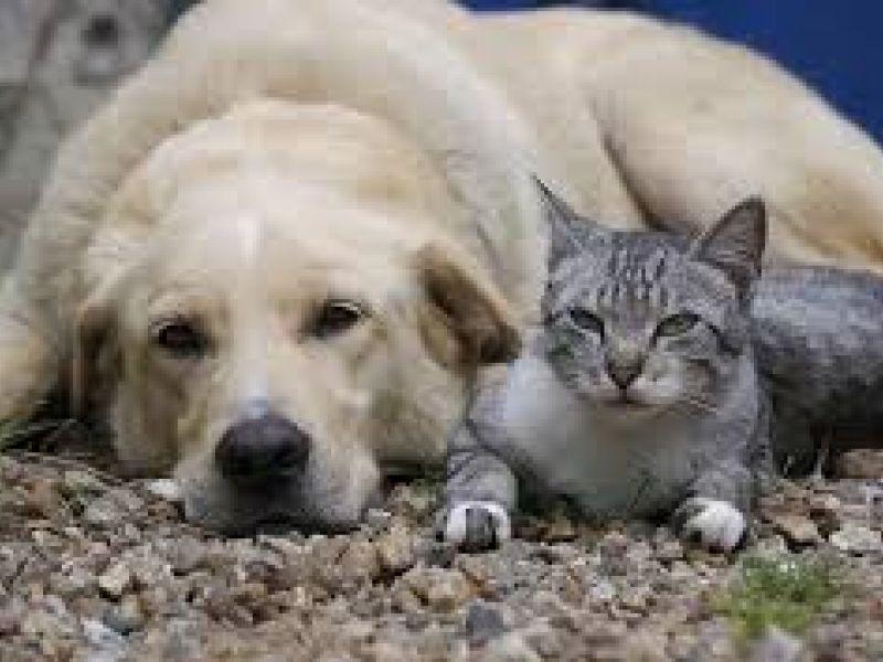 Atropelar cães e gatos pode acarretar em pena de detenção de seis meses a dois anos