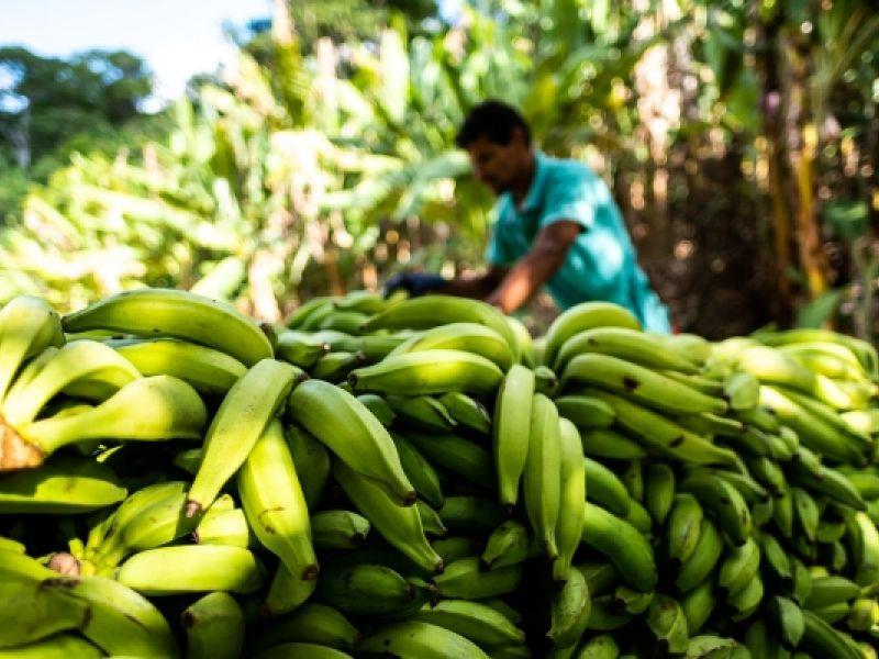 Projeto de fruticultura irrigada no Sertão vai gerar cerca de 900 empregos diretos