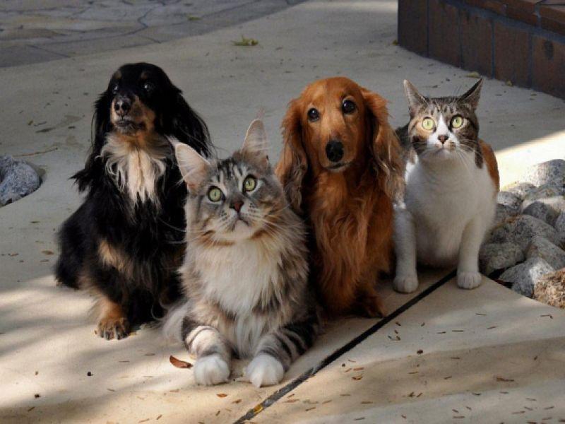Projeto de lei obriga agressor a custear tratamento de animal maltratado