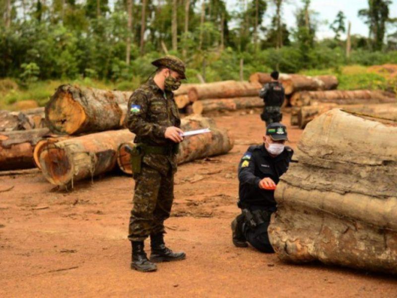 Operação Verde Brasil 2 evidencia a importância do combate aos crimes ambientais