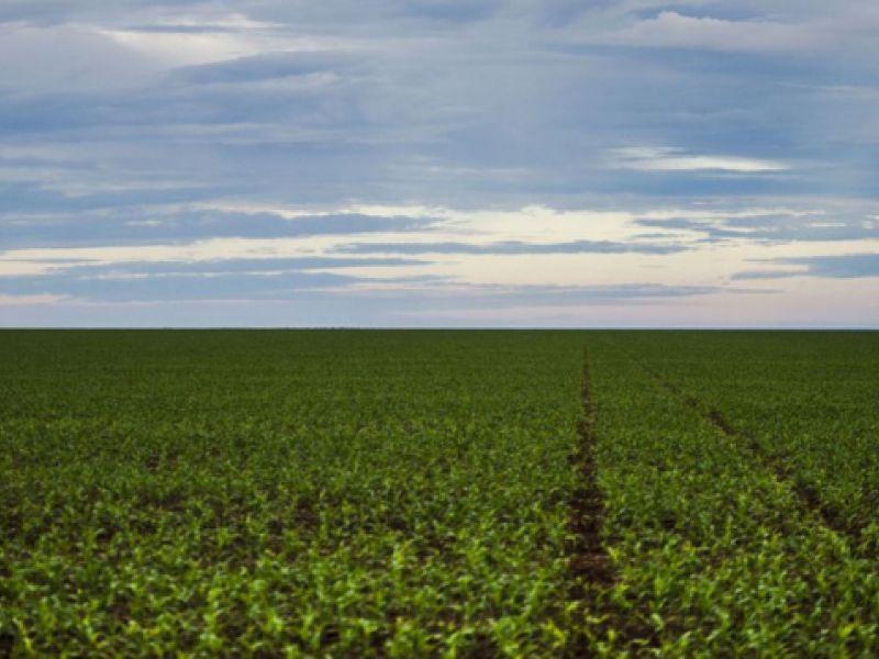 Registro de defensivos agrícolas de controle biológico bate recorde em 2020