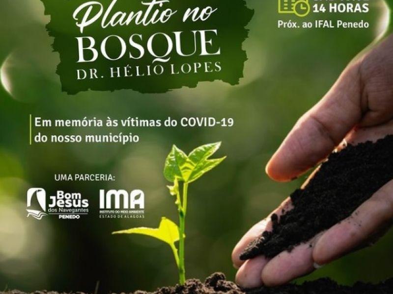 Em homenagem às vítimas da Covid-19, mudas de árvores serão plantadas em Penedo