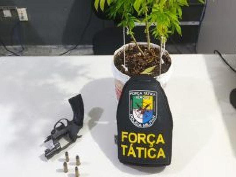 PM prende homem por posse ilegal de arma de fogo e cultivo irregular de maconha