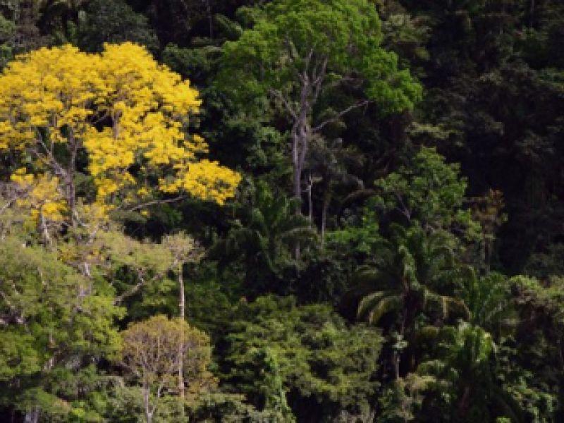 Meio Ambiente: Programa Adote um Parque ganha nova adesão