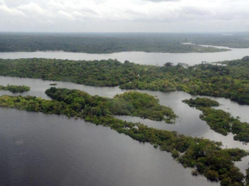 Floresta + Empreendedor: Governo age para preservar matas e biomas brasileiros