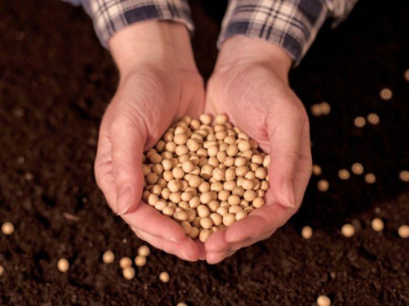 Agricultura: safra recorde deve colher 273,8 milhões de toneladas de grãos