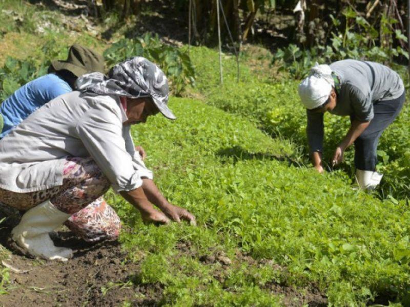 Agricultura: pagamento do Garantia-Safra é antecipado em sete estados