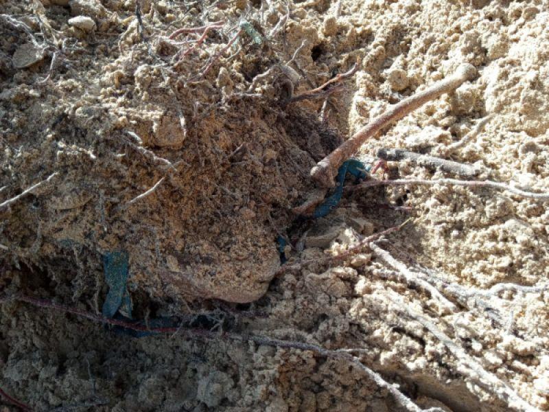 Sutiã e ossos são encontrados no mesmo local onde crânio foi achado no Pontal do Peba