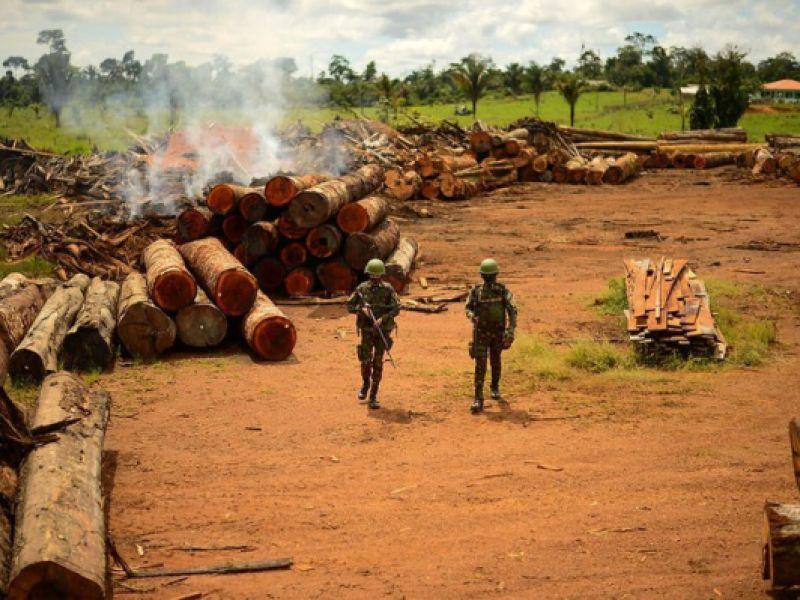 Meio Ambiente: Brasil trabalha para reduzir desmatamento ilegal
