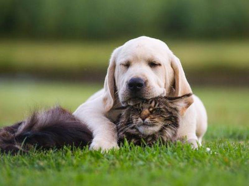 Pesquisa divulga que conviver com PETs traz benefícios à saúde mental