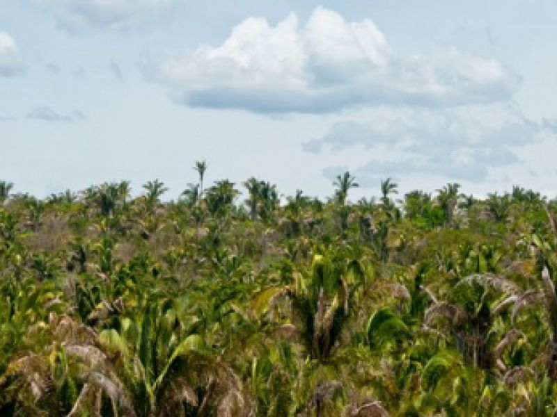Adote um Parque: encaminhada oitava adoção na Amazônia