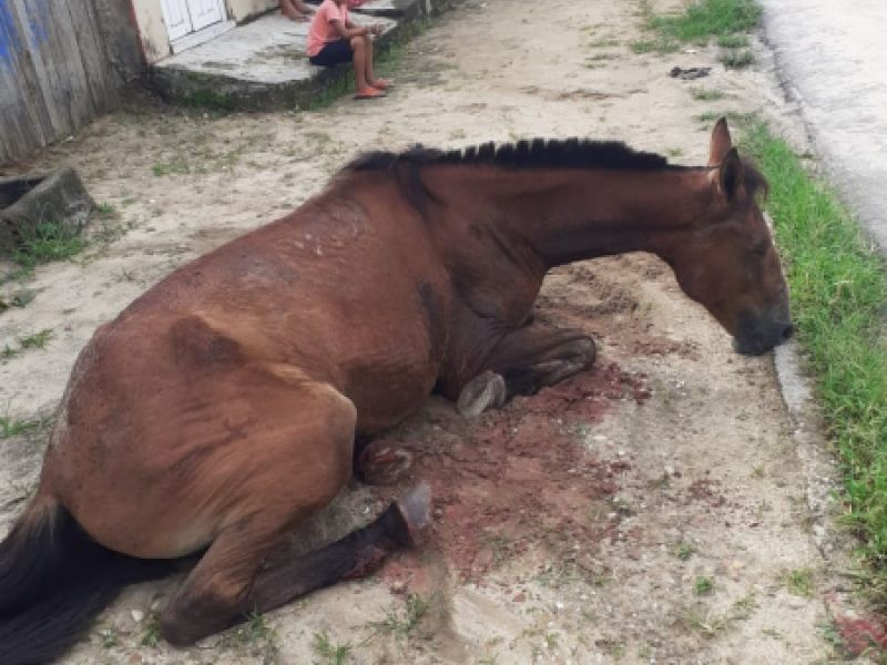 Cavalo é esfaqueado em plena luz do dia na Vila Matias, parte alta de Penedo