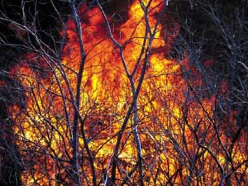 Brasil tem quase 14 mil focos de queimadas nesta quinta-feira