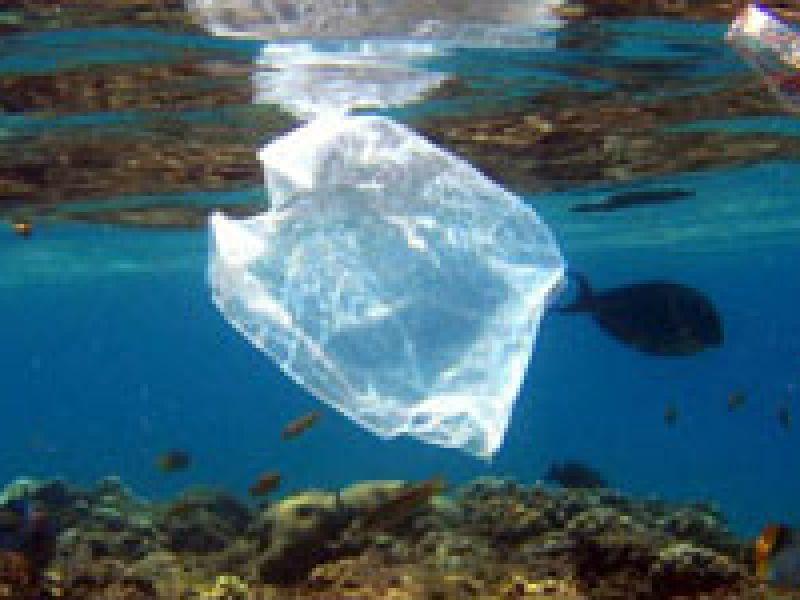 Consumidor está consciente sobre danos causados pelos sacos plásticos