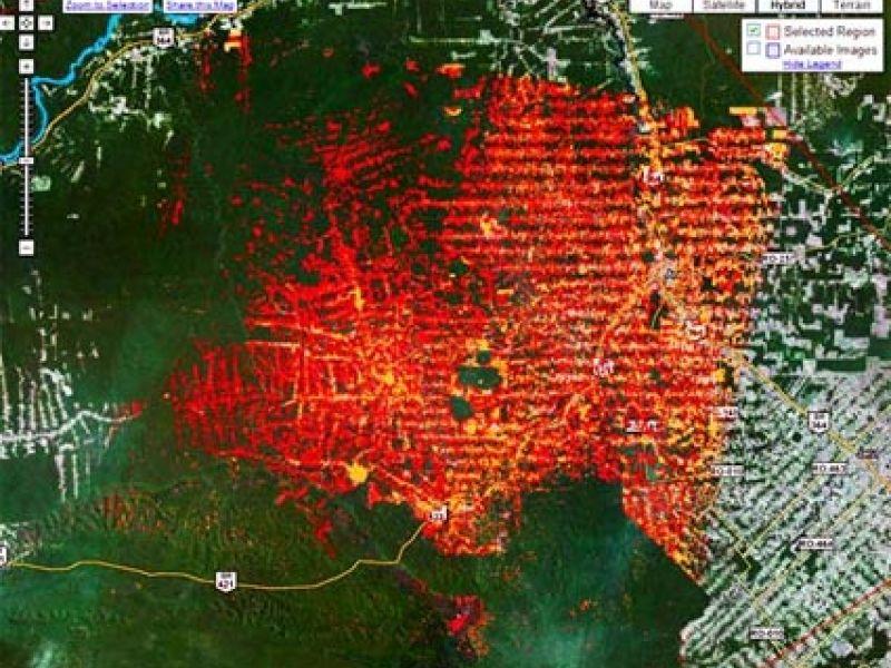 Google cria sistema global de monitoramento de florestas